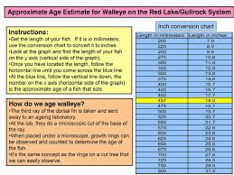 Northern Pike Age Chart Wrights Camp Blog July 2014