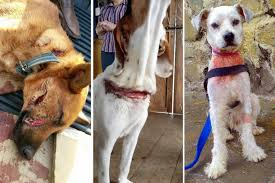 persuasive essay on animal abuse essay academic writing service   animal welfare bill gains momentum as horrifying abuse