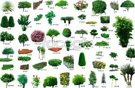 Image result for trees in landscaping