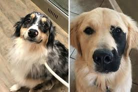 17 Dogs Who Are So Hecking Cute That I ...