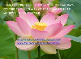 Beautiful Quotes With Flowers Best Of Beauty Quotes Be Positive With Life Quote With Dahlia Flowers Picture