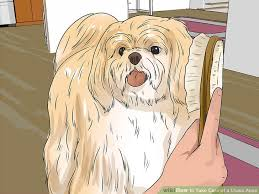 Lhasa Apso Diet Chart How To Take Care Of A Lhasa Apso 14 Steps With Pictures