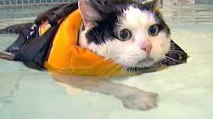 Image result for cat swimming