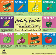 Plant Compatibility Vegetable Gardens Chart Companion Planting For Top 10 Veggies Grown In Us Farmers