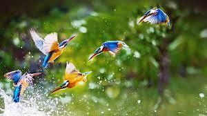 Rain Bird Wallpapers - Top Free Rain ...