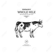 Cow Template Farm Cow Vintage Cow Illustration Design Template Vector Illustration