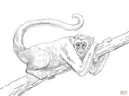 rainforest animals coloring pages free printable pictures best of