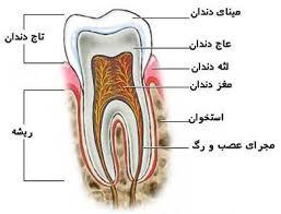 Image result for عکس دندانهای شیری