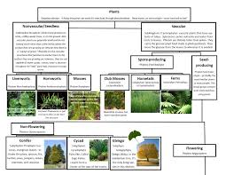 Plant Kingdom Classification Chart For Kids A Leah Bou Original Plant Classification Chart Pg 1 Of 2