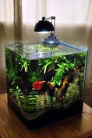 small screenshot 1 office fish. plain fish planted 6 gallon eheim  rodstewart on plantedtanknet on small screenshot 1 office fish u