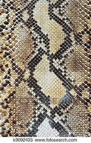 Snake Skin Pattern Awesome Stock Photo Of Snake Skin Pattern Background K48 Search Stock