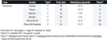 Ark And Co Size Chart Prime Ark Freedom Blackberry Plants Carica Co