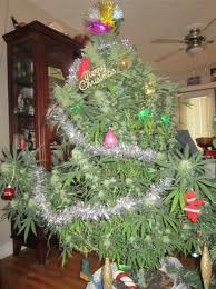 pot plants pictures   ... Man's Christmas Tree... Is Another Man's