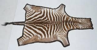 genuine zebra skin hide rug mounted on brown