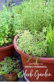 perennial herb container garden