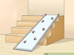 image titled help an old dog up the stairs step 1