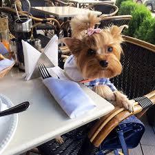Картинки по запросу собачка в ресторане