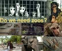 Some people think that wild animals should not be kept in zoos      Resume Stunning Argumentative Essay Examples For College Essay outline  definition Teodor Ilincai Heart Wrenchingly Beautiful Definition