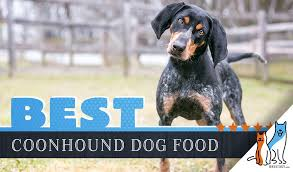 Bluetick Coonhound Size Chart 6 Best Coonhound Dog Foods Plus Top Brands For Puppies Seniors