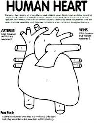 Small Picture Make a Life Size Body Map to Help Kids Learn Anatomy Teaching