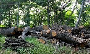 Image result for متخلفان عرصههای منابع طبیعی
