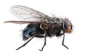 Small Black Flies In Kitchen Fly Control How To Get Rid Of Keep Flies Away Fly Killer Poison