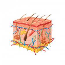 Lichen planus: Causes, symptoms, and treatments