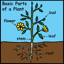 plant diagram clipartdownload plant diagram clipart
