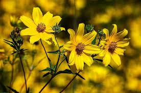 47 native plants for florida flowers