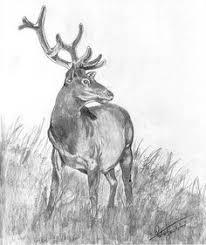 199 Best Deer Sketches Images Deer Sketch Deer Drawing