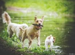 Schecker Ratgeber Rund Um Dem Hund
