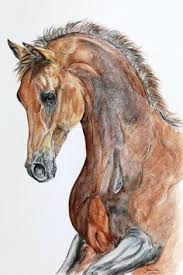 horse drawing in color. Delighful Drawing Horse Drawing Done In Pencil To Horse Drawing In Color