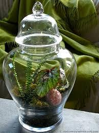 apothocary jar terrarium michaela at tge