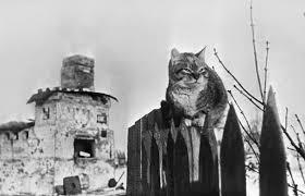 Солнышко в сердце Животные воины Великой Отечественной войны  Кошки безошибочно определяли приближение надвигающейся бомбардировки и проявляя беспокойство предупреждали об этом своих хозяев