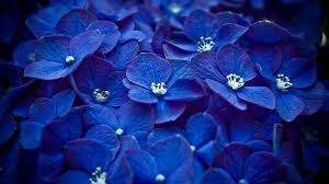 blue flowers background tumblr. Wonderful Background Blue Flowers Hd Free Wallpapers For Tumblr With Blue Flowers Background Tumblr