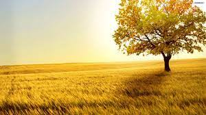 40 HD Tree Wallpapers/Backgrounds For ...