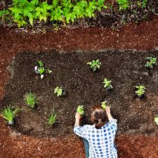 how to plant garden. how to plant an easy edible garden vegetables sunset grow it guide one day and water