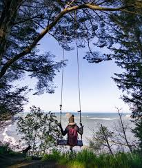 Tree Swing Tree Swing At College Cove Trinidad State Beach Ca