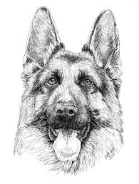 German Shepherd Dog Coloring Pages About Animals German Adult