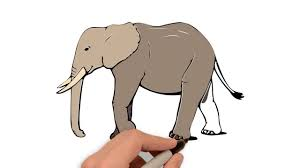 elephant color. Fine Elephant How To Draw And Color An Elephant  Easiest Drawing Coloring Pages In E