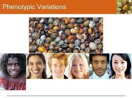8 phenotypic variations