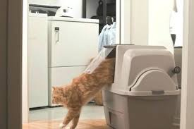 hagen catit hooded cat litter box. Smart Cat Litter Box Catit Smartsift Hooded Hagen P
