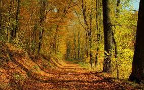 HD Autumn Forest Landscape Desktop ...