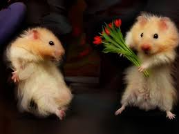 Image result for animals with flowers