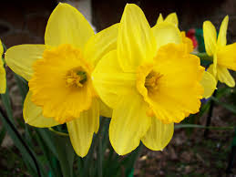 file yellow flower 5 jpg