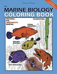 the zoology coloring book zoology coloring books and books