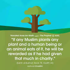 Plant A Tree Path To Sufi Healing Islamic Quotes Muslim Hadith