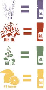 Part 3: The Plant Perspective | dōTERRA <b>Essential Oils</b>