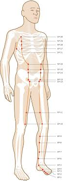 Leg Acupressure Points Chart Acupuncture Points On Your Legs Feet Smarter Healing