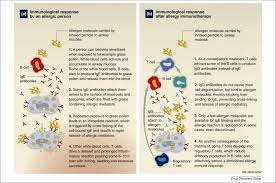 Allergy immunotherapy: the future of allergy treatment - ScienceDirect